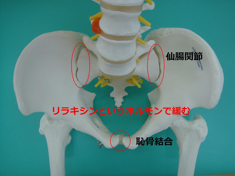 出産時の骨盤の変化