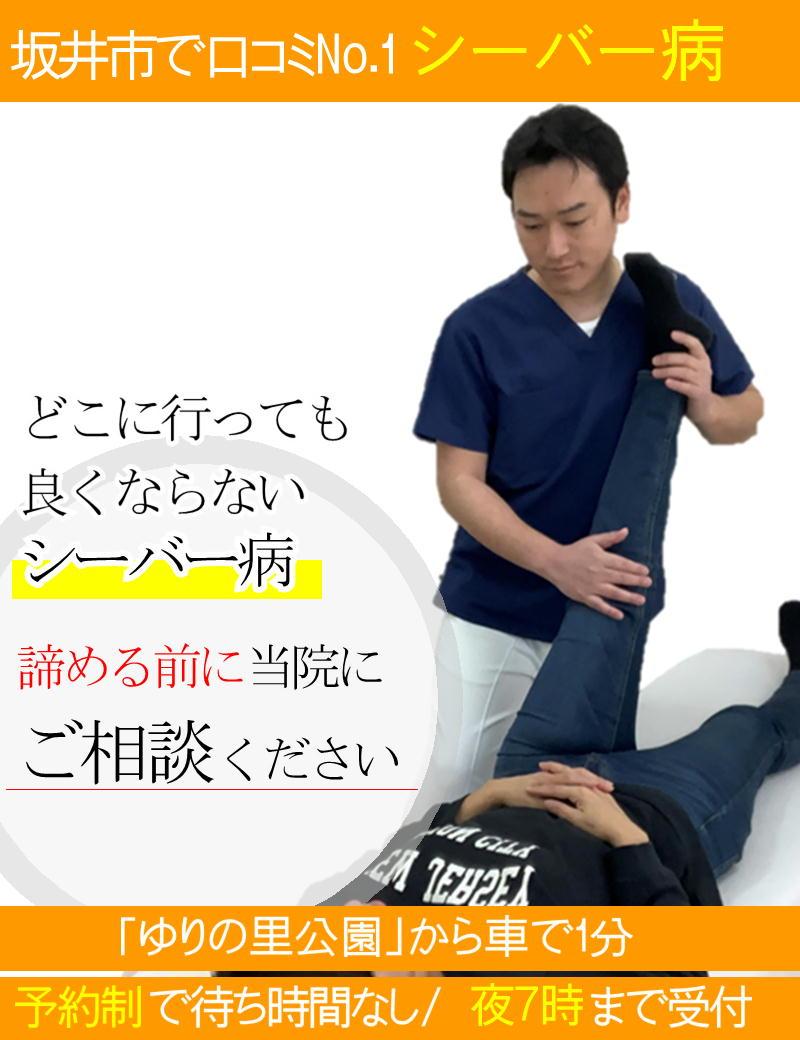 シーバー病の改善-坂井市春江町ひまわり整骨院