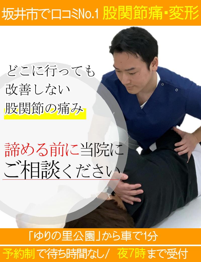 股関節の痛みを改善-坂井市春江町ひまわり整骨院