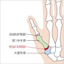 手首の関節の構造